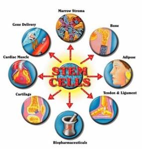 stem_cells_2